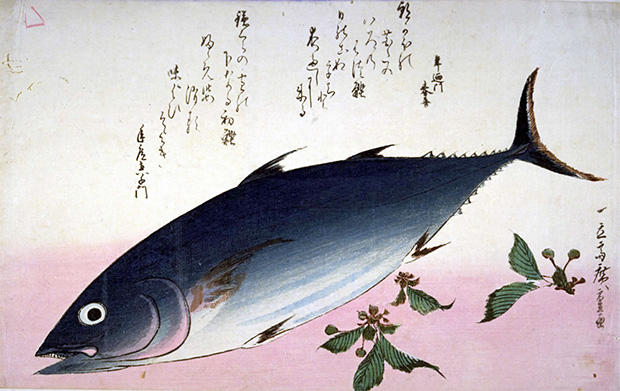 広重魚尽の鰹と桜