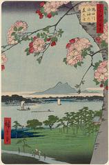 35隅田川水神の森眞崎 (春の部)