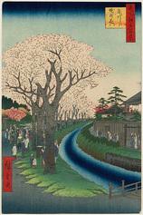 42玉川堤の花 (春の部)