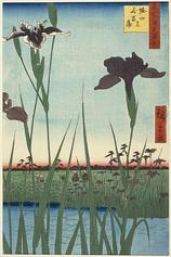 56堀切の花菖蒲 (夏の部)